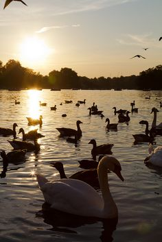 This place has my heart ❤️ Hyde Park, London, England. Make a stop-off at this famous #London green zone on the Original London Tour: https://www.cityxplora.com/products/original-london-sightseeing-tour. #HydePark