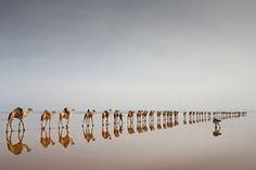 Extraindo sal, lago Asale, Etiópia
