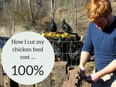 Cut chicken feed costs with compost rotation and have compost for garden!