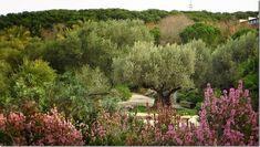 Jardì Botanic de Barcelona–by Josie - Furighedda gardening