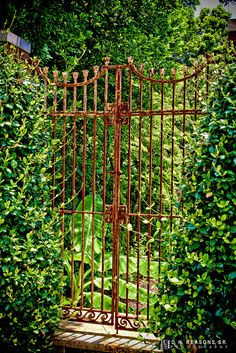 Old Iron Gate Climbing Roses Check Out The Website, Some Girl Tried A New  Diet And Tracked Her Results | Have | Pinterest | Iron Gates, Iron And Rose