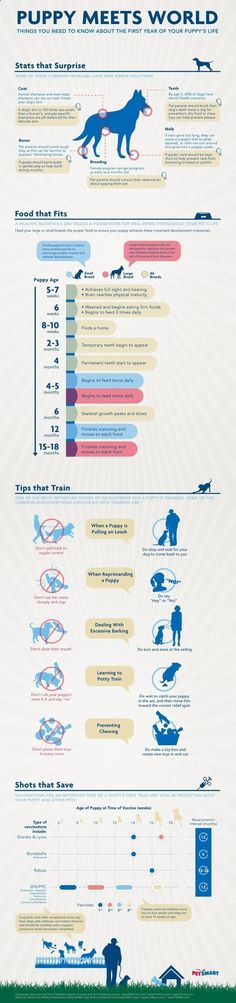 Trend Accesories - Understanding Your Puppy's Needs: Infographic - great puppy training tips! #puppytraining From your friends at phoenix dog in home dog trainingk9katelynn see more about Scottsdale dog training at k9katelynn.com! Pinterest with over 18,300 followers! Google plus with over 120,000 views! You tube with over 400 videos and 50,000 views!! Google presented a great variety of new products on October 4 in San Francisco.However, these releases are not the only Made for Google...