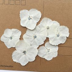 Colouring Dried Flowers New Hottest 2017 Color Hydrangea Framed Pressed Flowers for Dried And Pressed Flowers, Dried Flowers, Amazing Flowers, Colorful Flowers, Green Hydrangea, Flower Coloring Pages, Diy Jewelry Supplies, Buying Wholesale, Frame