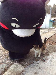 Kumamon meet a kitty. Animals And Pets, Baby Animals, Funny Animals, Cute Animals, I Love Cats, Cute Cats, Funny Cats, Kumamoto, Old Dress