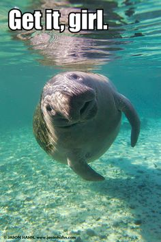 Calming Manatee. This website made me giggle for like 10 minutes @Michelle Fantone thanks lady friend!