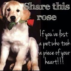 A rose for a lost pet