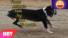 Funny Animals Fails 1   Try Not To Laugh Challenge   Compilation Vines