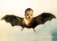Bat Baby...Whoosh! Seen just outside my window Saturday night.