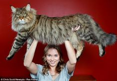 Larger than life: Natalie Chettle holds her mother's giant cat Rupert over her head.