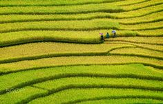 Hmong ethnic girls going to school on rice field by Degist nguyen on 500px