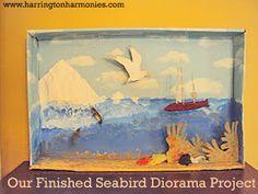 Seabird Unit Study   Harrington Harmonies