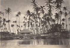 Kamehameha V's summer residence at Helumoa - also known as The Royal Grove - as photographed in the mid-1800s.