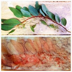 eucalyptus leaves from notjustnat creative blog