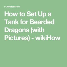 How to Set Up a Tank for Bearded Dragons 609584db32