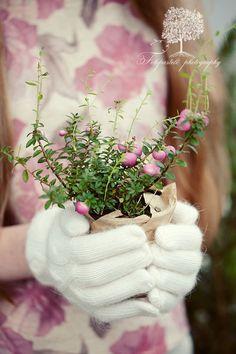 Giving Hands My Flower, Flower Power, How Beautiful, Beautiful Flowers, Beautiful Things, Hands Holding Flowers, Holding Hands, Giving Hands, Pink Garden