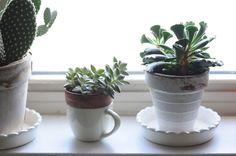 15x Eucalyptus Huis : 279 best plants images indoor house plants indoor plants