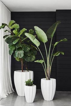 Gorgeous Plants Featuring a unique rippled design, Allia Concrete Planters can be inserted with lush greenery to add interest to both gardens or indoor spaces Plant Design, Garden Design, Design Art, Modern Design, Plantas Indoor, House Plants Decor, Indoor Plant Decor, Plants In Living Room, Bedroom Plants