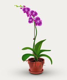How to Create Orchid Plant in Adobe Illustrator #vectortutorials…