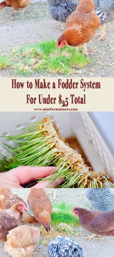 How to Make a Cheap Easy Fodder System. This Fodder System only cost me $25! It was so easy and simple to make and my chickens really love the fodder!