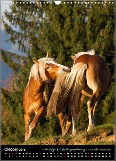 Home - motiv-digital Horses, Digital, Animals, Pictures, October, Horseback Riding, Animales, Animaux, Animal