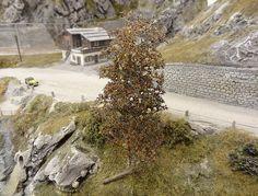 Schweizer Alpenbahn | Laubbäume und Tannen/Fichten