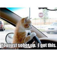 I don't know why but animals pretending to drive is one of the funniest things ever!