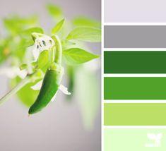chili greens
