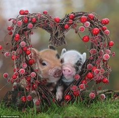 Animal amore! The creatures that show it's not only humans who like to get up close and personal on Valentine's Day