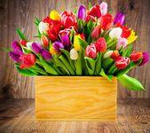 Tulipány v poli