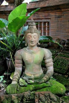 The Buddha has overcome all hatred within his own mind.