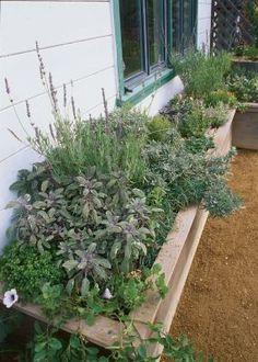 herb boxsweet marjoram, winter savory, oregano, and rosemaries 'Golden Rain' and 'Blue Boy'. Plants For Planters, Garden Planters, Herbs Garden, Garden Tips, Herb Garden Design, Fine Gardening, Container Gardening, Lime, Garden Boxes