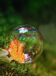 Soap bubble on moss