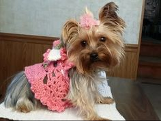 "(Left Hand) ""Glama's Adorable Princess Puppy Dress"" - Pet Fashion clothes for dogs and cats Ideas from Professionals Dog Sweater Pattern, Crochet Dog Sweater, Dog Pattern, Dog Crochet, Easy Crochet, Free Crochet, Crochet Dog Clothes, Pet Clothes, Dog Clothing"