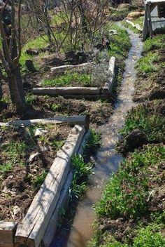 The BEST site I have seen on the subject! Permaculture Design: Vegetable & Herb Guilds   Permaculture Magazine
