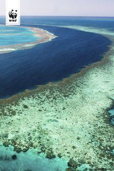 Gute Nachrichten aus Australien: Der Bauschutt der neuen Kohlehäfen soll nicht ins Great Barrier Reef gekippt werden! Dafür haben wir lange gemeinsam gekämpft! Doch das Weltnaturerbe ist damit noch nicht geschützt: www.wwf.de/…/great-barrier-reef-eine-reasonable-entscheidung #fightforthereef