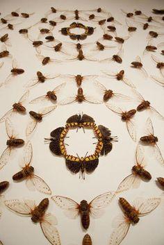10   Meet Jennifer Angus, An Artist Whose Medium Is Insects [Slideshow]   Co.Design   business + design