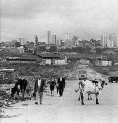 Avenida Marginal Pinheiros.. 1966 Old Pictures, Old Photos, Vintage Photos, Nostalgia Critic, Old Photographs, British Monarchy, Old City, South America, Brazil