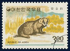 POSTAGE STAMP OF FAUNA, Badgers, Animals, Yellow, Brown, Green, 1966 12 15, 동물시리즈, 1966년12월15일, 537, 오소리, postage 우표