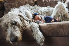 In Safe Hands - Happiness is a shaggy dog. Pug Puppies, Pet Dogs, Dog Cat, Pets, Doggies, Irish Wolfhound Puppies, Irish Wolfhounds, Scottish Deerhound, Cocker