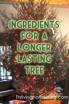 give your tree a good drink of sprite the sugar keeps needles - What Do You Put In Christmas Tree Water