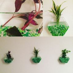 Set of 6 empty hexagon glass wall terrarium//wall hanging fish bowl//indoor wall planters//rooting plant holder//room art wall decor by NewDreamWorld on Etsy https://www.etsy.com/uk/listing/250856352/set-of-6-empty-hexagon-glass-wall