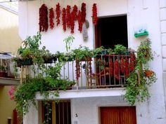 créer un potager sur le balcon avec des herbes vivaces, plantes vertes, légumes et piments rouges