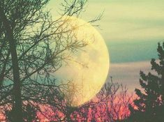 Take me to the moon!