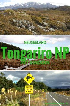 Den Tongariro National Park in Neuseeland mit Kindern besuchen? Klar, da gibt es viel mehr zu tun als das Tongariro Alpine Crossing!