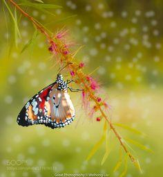 FlowerButterfly by weihongliu6 #nature #photooftheday #amazing #picoftheday