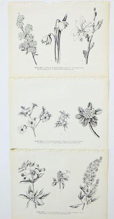 Set of 3 Vintage prints of flowers by PeonyandThistlePaper