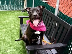 AT RISK TO BE DESTROYED 6/22/18 Dory is at-risk of euthanasia and needs placement. Please consider opening your home today! Hello, my name is Dory. My animal id is #30474. I am a female black dog at the Manhattan Animal Care Center. The shelter thinks I am about 11 months 2 weeks old. I came into the shelter as a stray on 06-Jun-2018. Reserve Dory