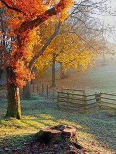 Autumn country morning...