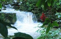 Cascada las Latas - Se encuentra a 12 km. de Tena en la vía a Pto. Misahuallí, margen izquierdo de la carretera.  Napo-Ecuador