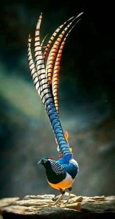 70 Ideas tropical bird in flight for 2019 - Fasan und Co - Animals Most Beautiful Birds, Pretty Birds, Beautiful Pictures, Rare Birds, Exotic Birds, Exotic Pets, Tropical Birds, Colorful Birds, Tropical Animals